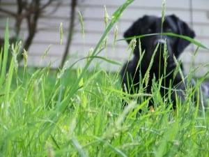Izzie in the Long Grass