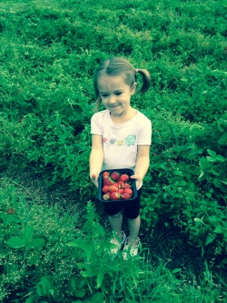 7-4-14 Strawberry picking