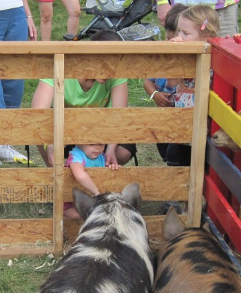 8-30-14 Farm Day Petting Zoo