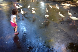 12-30-14 Zoo Fountain 2